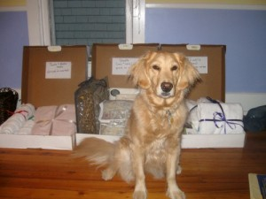 Honey the golden retriever in front of stuff for sale.