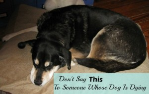 Don't Say this to someone whose dog is dying.