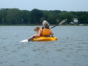 Honey the golden retriever rides in a kayak on the Choptank river.