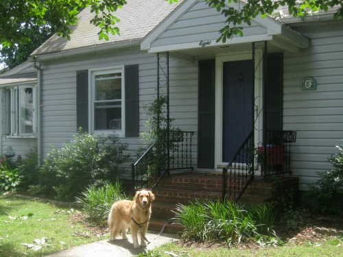 Honey the golden retriever stands in front of her temporary house.