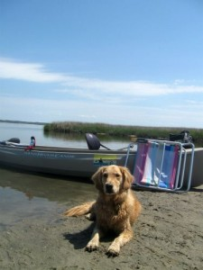 Honey the golden retriever with canoe.