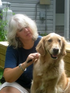 Honey the golden retriever gets groomed.