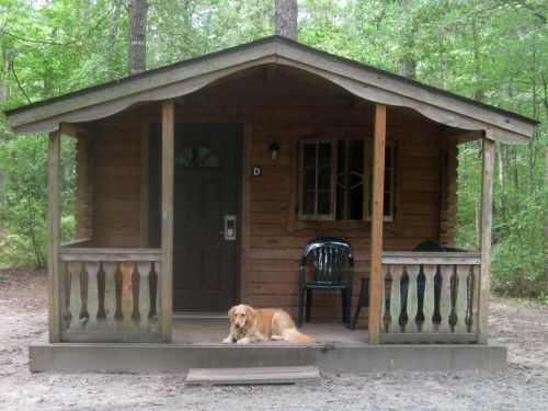 Honey the golden retriever in front of camping cabin.