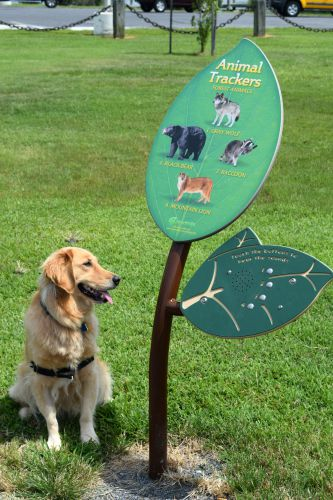 Honey the golden retriever reads about animals at Great Marsh Park.