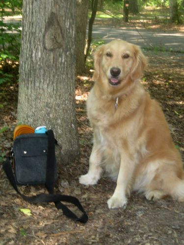 Honey the golden retriever with her Kurgo travel bowl.