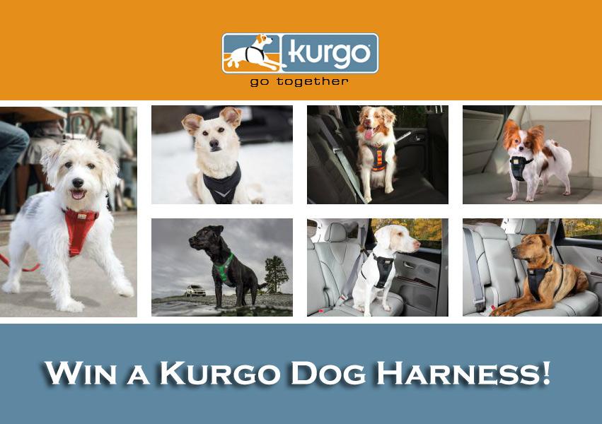 Win a Kurgo Dog Harness.