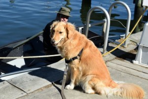 Honey the golden retriever dockside with Mike in the dinghy.