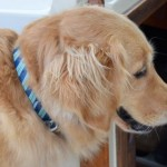 For The Wash-And-Wear Dog: #Kurgo Muck Collar Giveaway