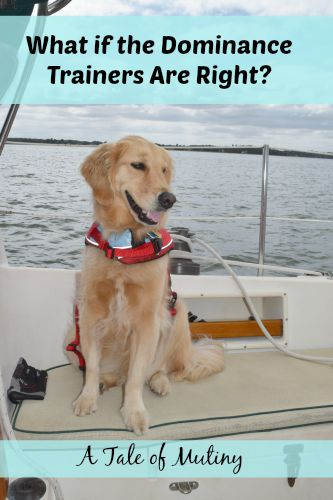 Honey the golden retriever is in charge.