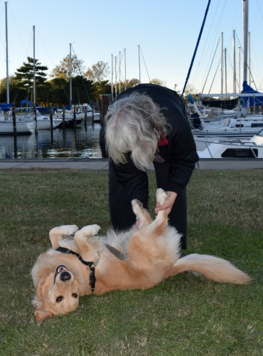 Honey the golden retriever plays on her back with Pam.