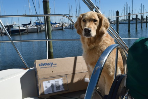 Honey the golden retriever on the boat with her chewy box of food.