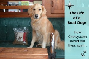 How do you feed a boat dog?