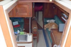 Honey the golden retriever lies on the starboard settee.