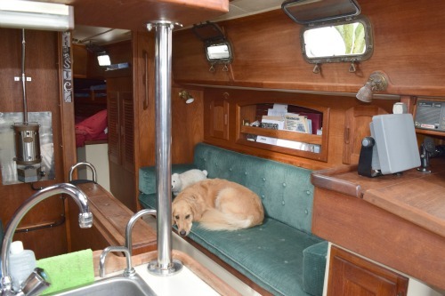 Honey the golden retriever rests on the starboard settee.