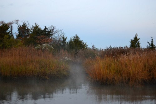 Cohansey River marshes.