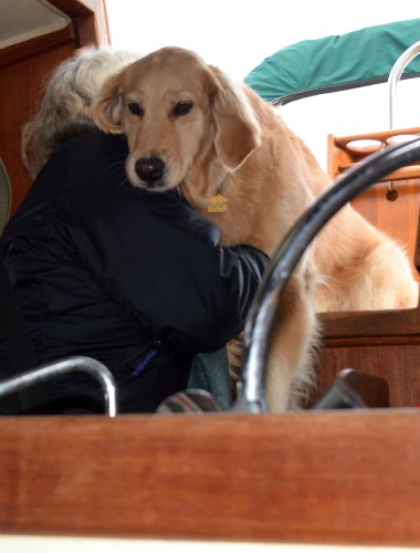 Honey the golden retriever flies through the cockpit.
