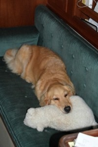 Honey the golden retriever naps in the cabin with Bear as a chin rest.