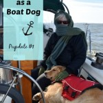 Honey The Boat Dog – A Pupdate
