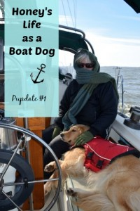 How does Honey the golden retriever like living on a sailboat?