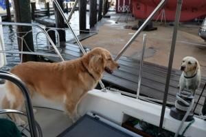 Honey tells dock dog Moose to keep it in his pants.