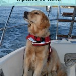 Where will Honey the sailing dog land?