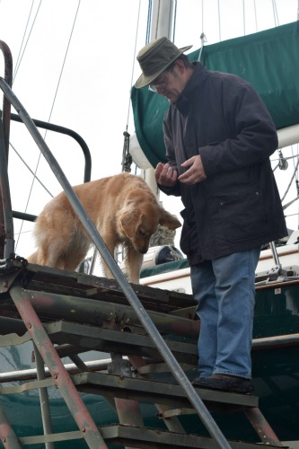 Honey the golden retriever - will she climb the boat steps?