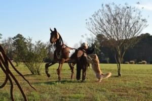 Honey the golden retriever jumps on a horse sculpture.