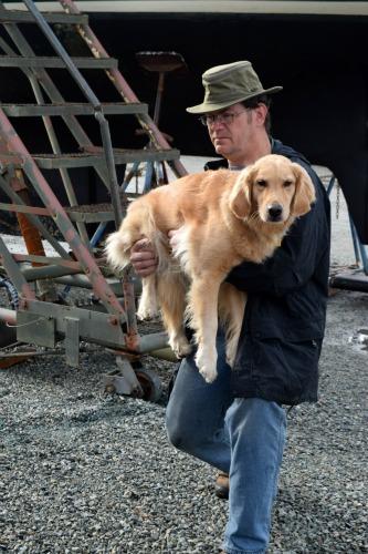 Honey the Golden retriever - I hate my dog.