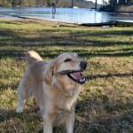 Nothing Like A Good Stick – Wordless Wednesday