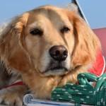Should You Get Pet Health Insurance?