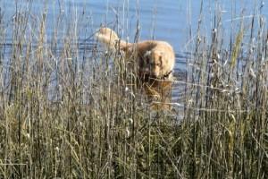 Consider a dog's feelings to avoid a training fail.