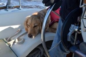 Consider your dog's feelings to avoid a dog training fail.