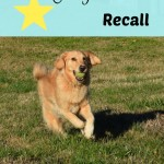 3 Must Knows For A Perfect Recall