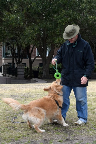 Honey the golden retriever plays a game with Mike.