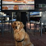 Pet Friendly And Human Friendly
