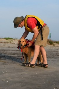 Honey the golden retriever gets her life jacket on.