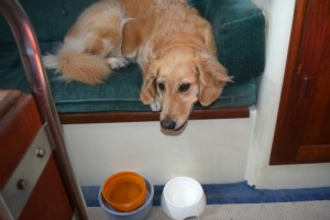Honey the golden retriever with her food and water bowls.