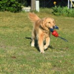 Improve Your Dog's Recall With Play