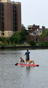 A paddle boarder in Hampton, VA with two large boxers.