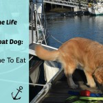 How Do We Feed The Dog?