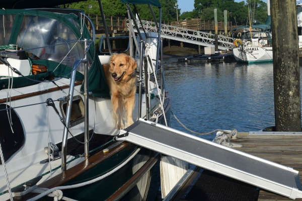 Honey the golden retriever on the boat with her ramp.