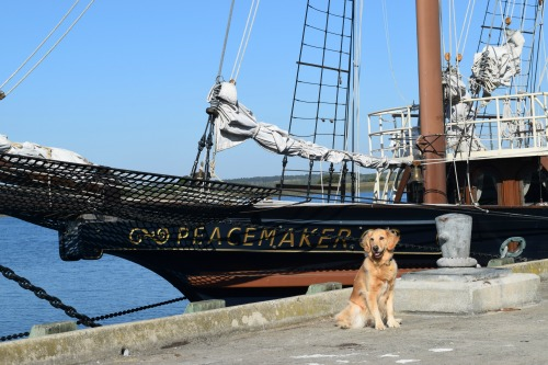 Honey the golden retriever poses in front of boat.