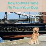 The Miraculous Way To Make More Time To Train Your Dog
