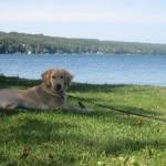 Golden Retriever and Lake