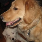 Something Blogging This Way Comes – Pet Blogger Challenge 2012