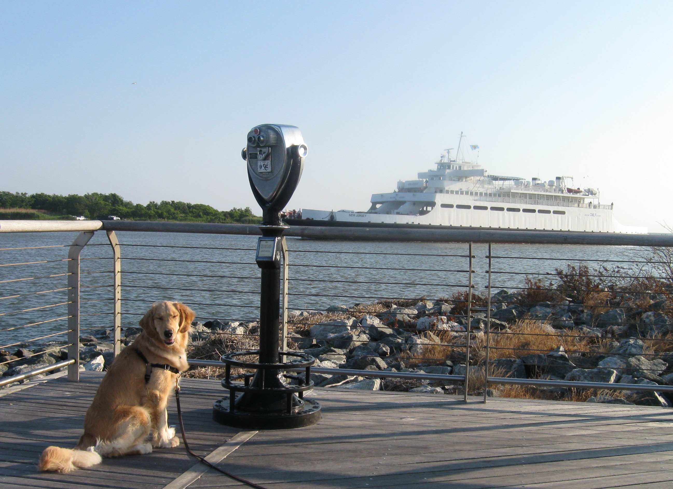 Honey the Golden Retriever at the Cape May Lewes Ferry Terminal