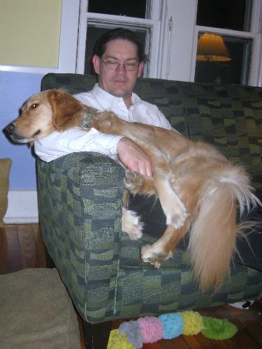 Honey the Golden Retriever is a lap dog.