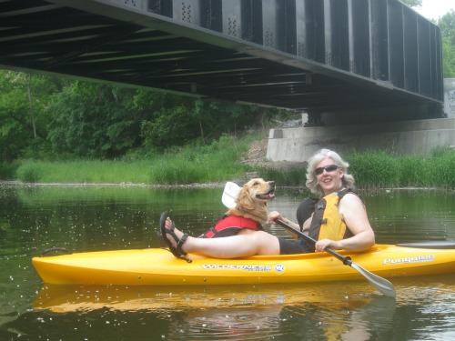 Honey the Golden Retriever is a kayaking dog.