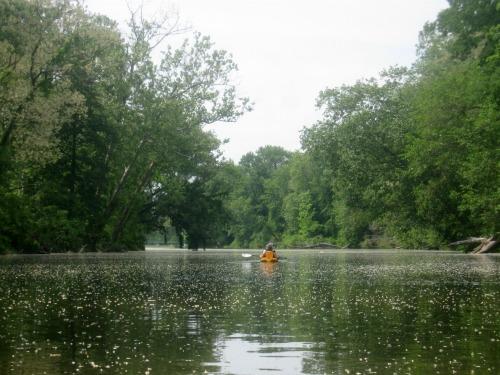 Honey the Golden Retriever is kayaking down Fall Creek.