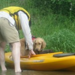 Honey the Golden Retriever rides in a kayak on Cayuga Lake.